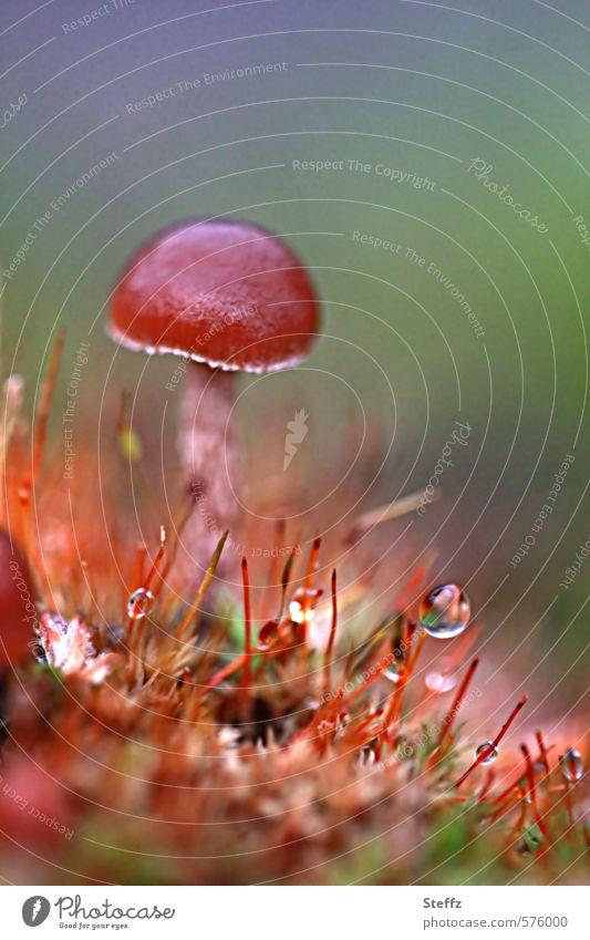 a thumb in the moss Tom Thumb Mushroom midget Moss Mushroom cap Woodground dew drops Autumn Wild plant Fresh Growth Dew Diminutive differently wax Drop