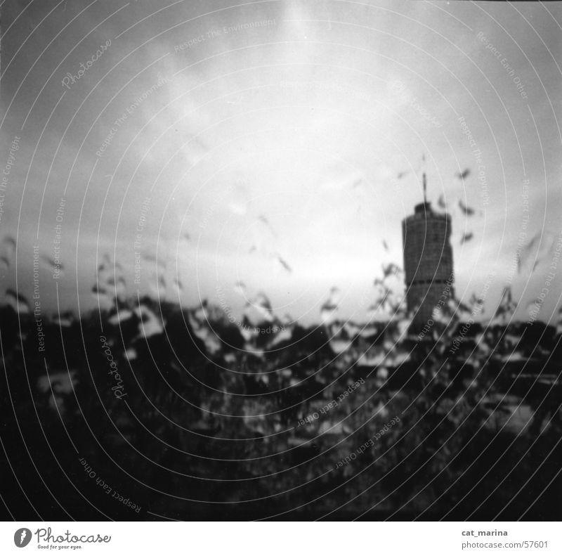 longing Moody Loneliness Rain