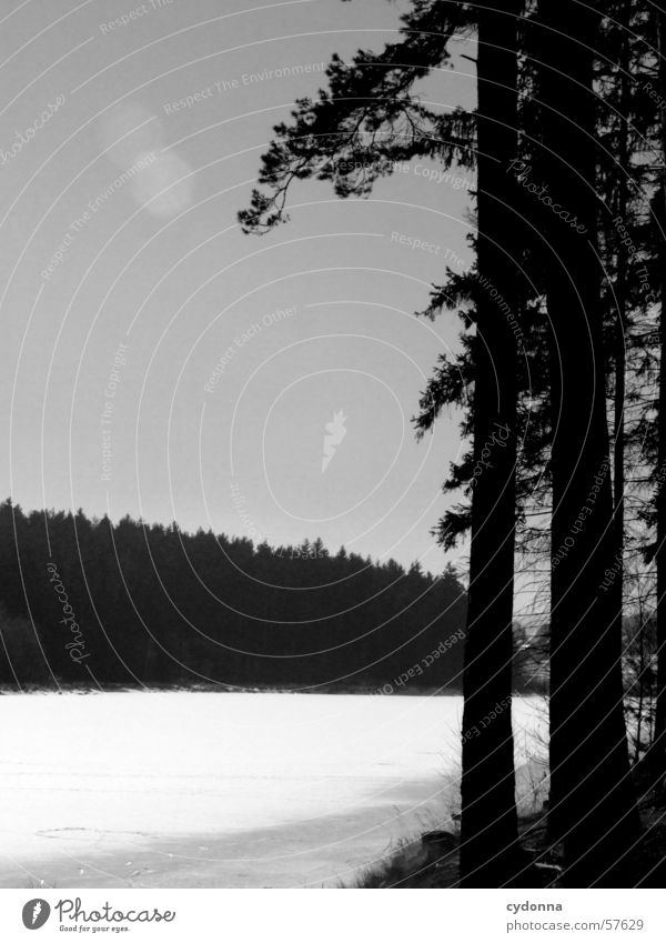 At the lake B/W Lake Tree Forest Fir tree Light Impression Winter Water Ice Landscape Nature Contrast Black & white photo Sun To go for a walk