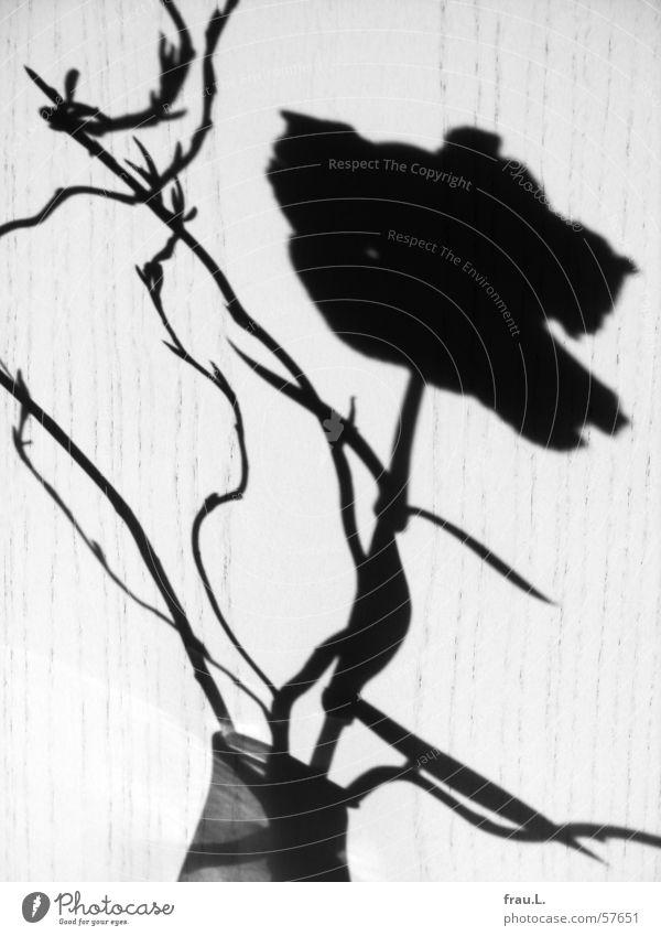 Nature Sun Flower Leaf Blossom Wood Door Decoration Living or residing Vase Plant Dianthus