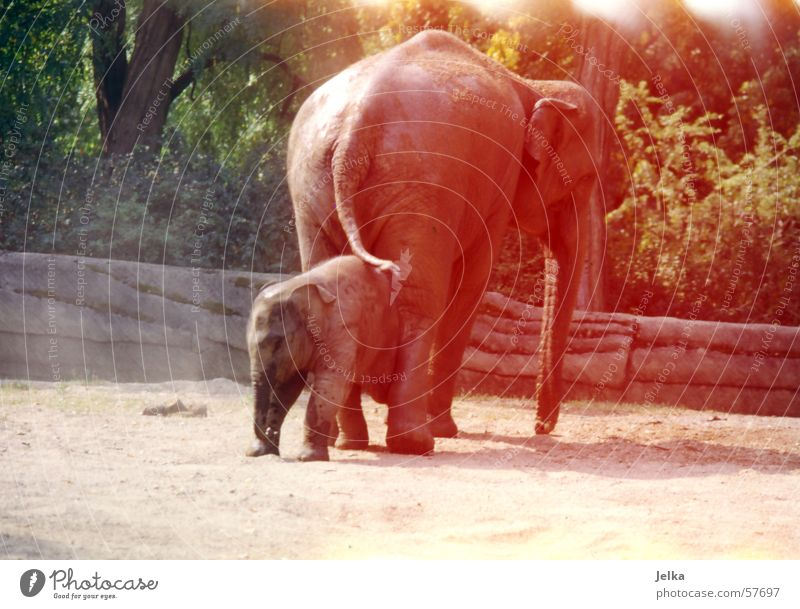 eli park Zoo Animal Elephant Baby elefant animals pachyderms Colour photo
