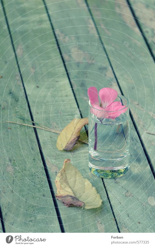 game over Bowl Bouquet Glass Water Emotions Moody Infatuation Romance Hospitality Sadness Relaxation Vacation & Travel Friendship Transience Colour photo