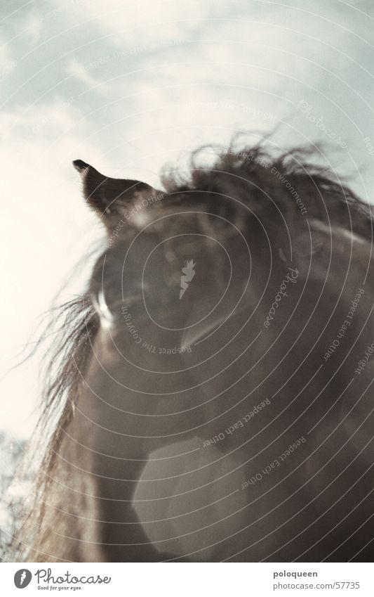 instantaneous Horse Brown Animal Eyes Horse's eyes Mane Horse's head Sky Pasture Sun Snow