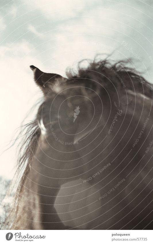 Sky Sun Animal Eyes Snow Brown Horse Pasture Mane Horse's head Horse's eyes