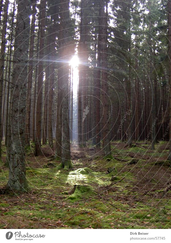 enlightenment Light Green Forest Lamp Hope ray of light sun trees Shadow Nature