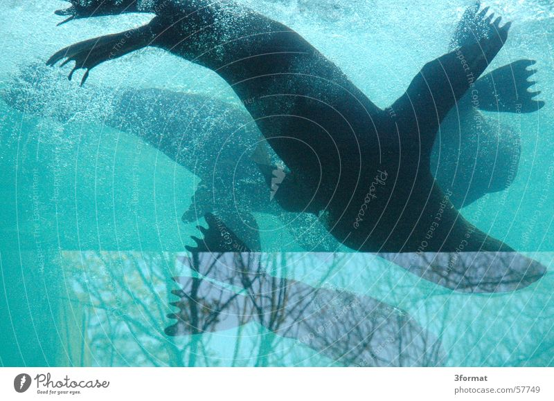 Water Blue Glass Window pane Pane Harbour seal