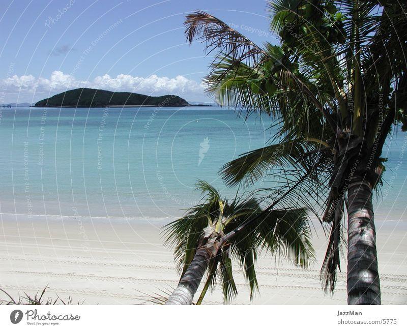 Sun Ocean Beach Island Virgin forest Palm tree Tree