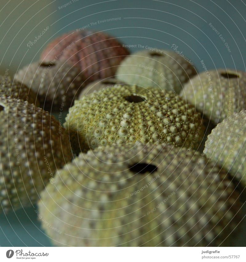 sea urchin Sea urchin Skeleton Discovery Sea urchin shell Burl Spotted Green Ocean Round Hollow Vacation & Travel Atlantic Ocean Structures and shapes