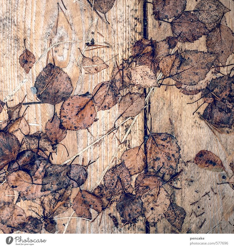 loose-leaf collection Nature Autumn Leaf Wood Esthetic Autumn leaves Wooden board Wood grain Transience Seasons Decoration Wet Brown Birch leaves Dank Paper