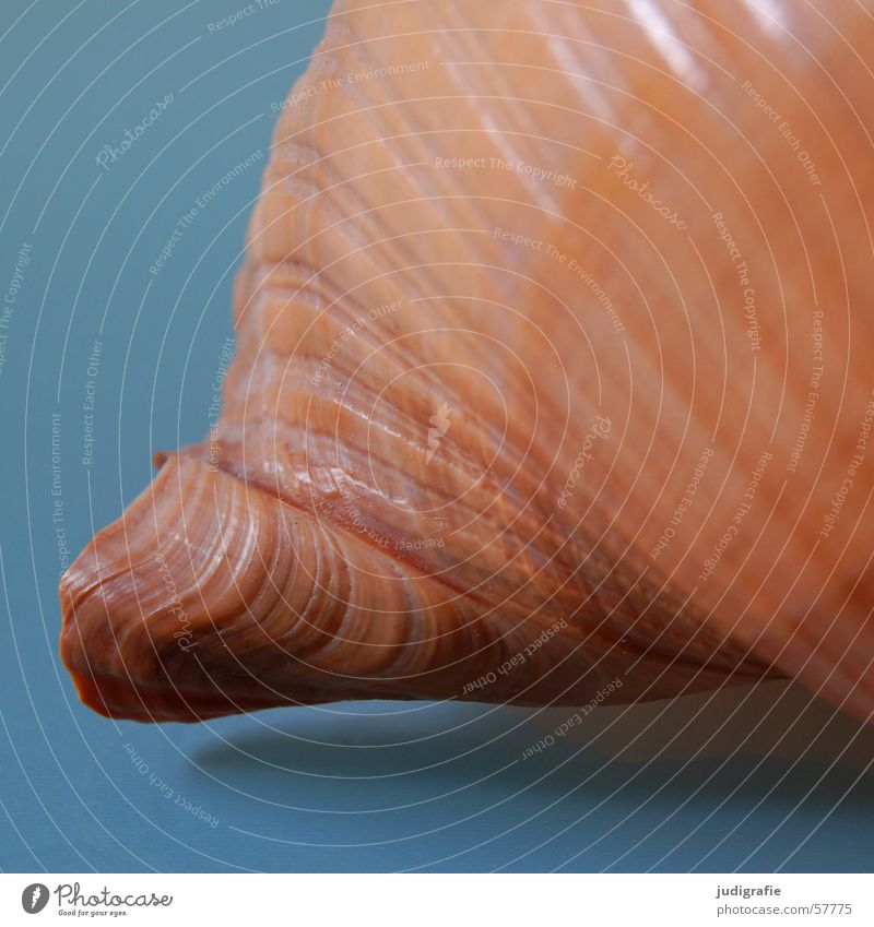 house Snail shell Mussel Ocean Brown House (Residential Structure) Safety (feeling of) Spiral Rotated Bobbin Ton snail Atlantic Ocean Loneliness
