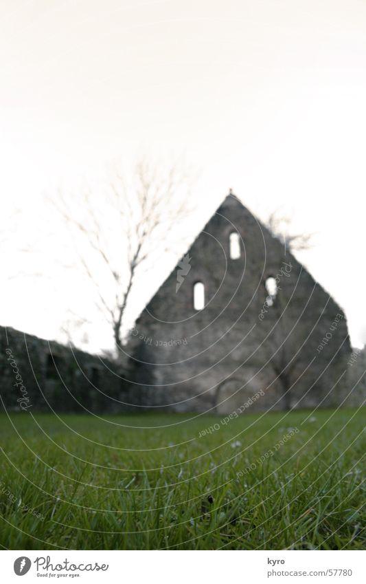 Tree Flower Green Plant Calm Meadow Death Window Grass Wall (barrier) Building Religion and faith Fog Near Branch Gate