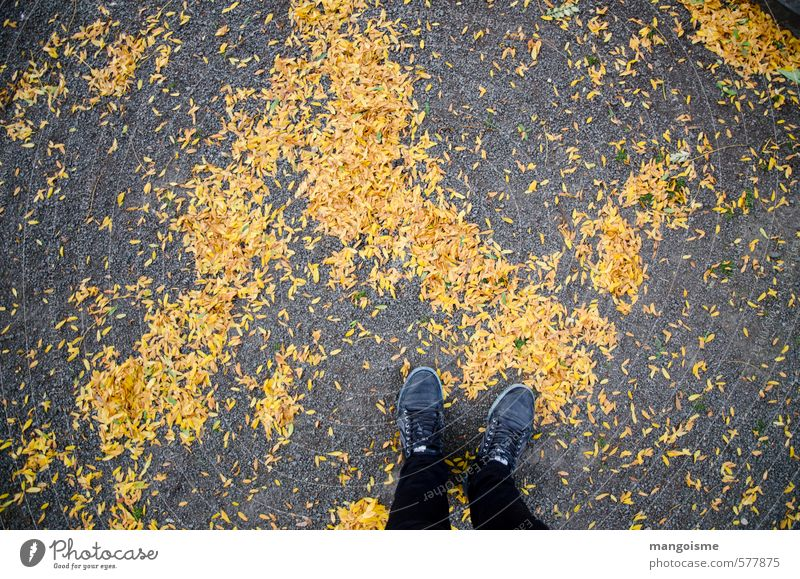 City Tree Leaf Black Forest Yellow Cold Environment Street Autumn Lanes & trails Going Orange Gold Walking Stand