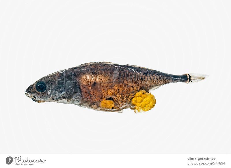 Dead fish. Nature Beautiful Water Animal Fish