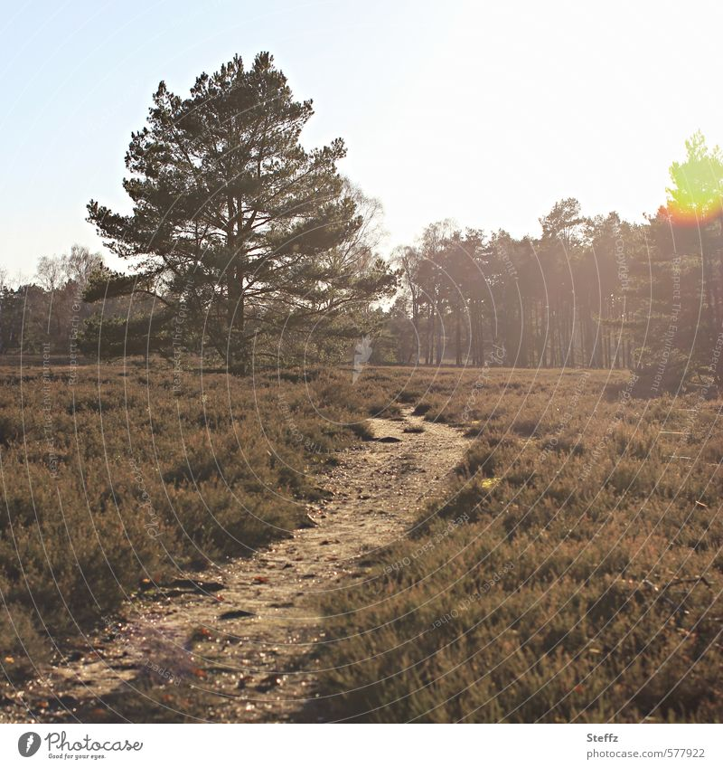 The Shining Environment Nature Landscape Plant Tree Bushes Wild plant Mountain heather Forest Heathland Natural Beautiful Brown Moody Romance Calm Mood lighting