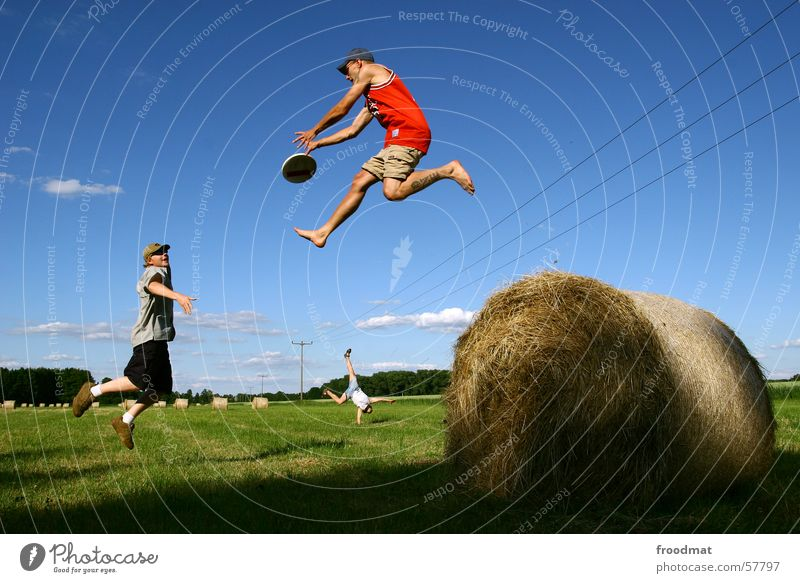 dynamic frisbee game Frisbee Jump Field Meadow Handstand Hay roll Electricity pylon Catch Hay bale Hop Simultaneous Sports Playing Action Exuberance Joy Frozen