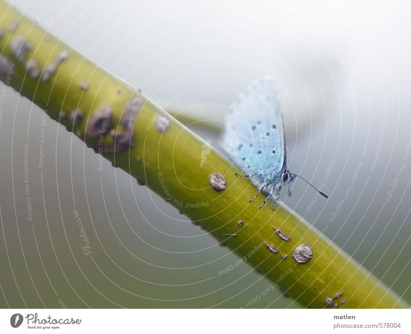 midget Nature Autumn Weather Bad weather Fog Animal Butterfly Wing 1 Cold Blue Gray Green Lateness willow branch Dwarf Colour photo Exterior shot