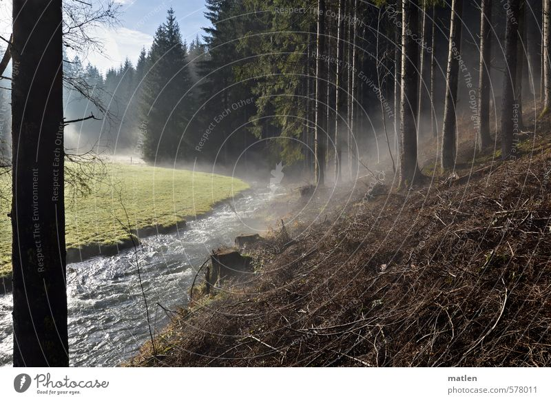 the breathing forest Landscape Plant Water Sky Clouds Winter Climate Beautiful weather Tree Forest Mountain Brown Green White Steam Fog trunk Coniferous forest