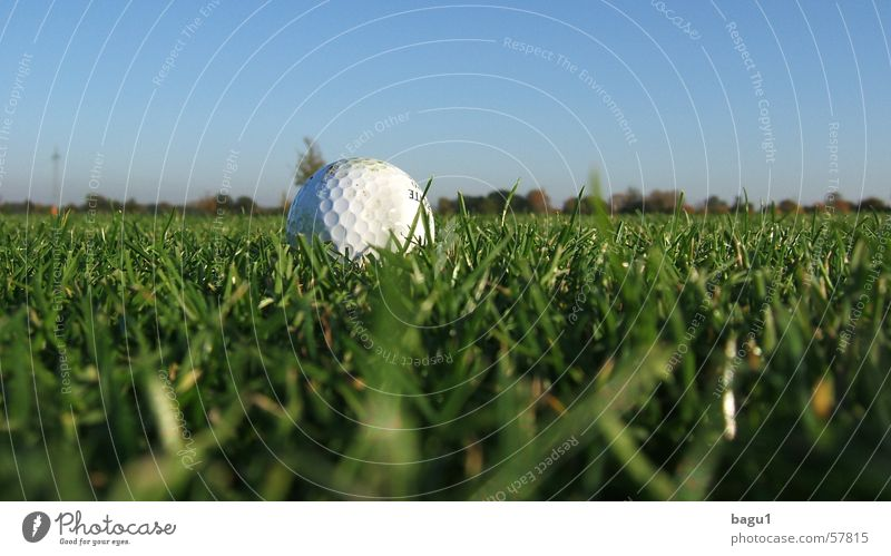 Earthworm Perspective Golf ball Grass Green fairway Lawn Sky Blue