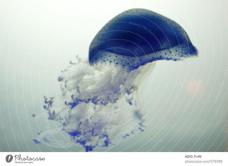 Animal Swimming & Bathing Elegant Wild animal Aquarium Jellyfish