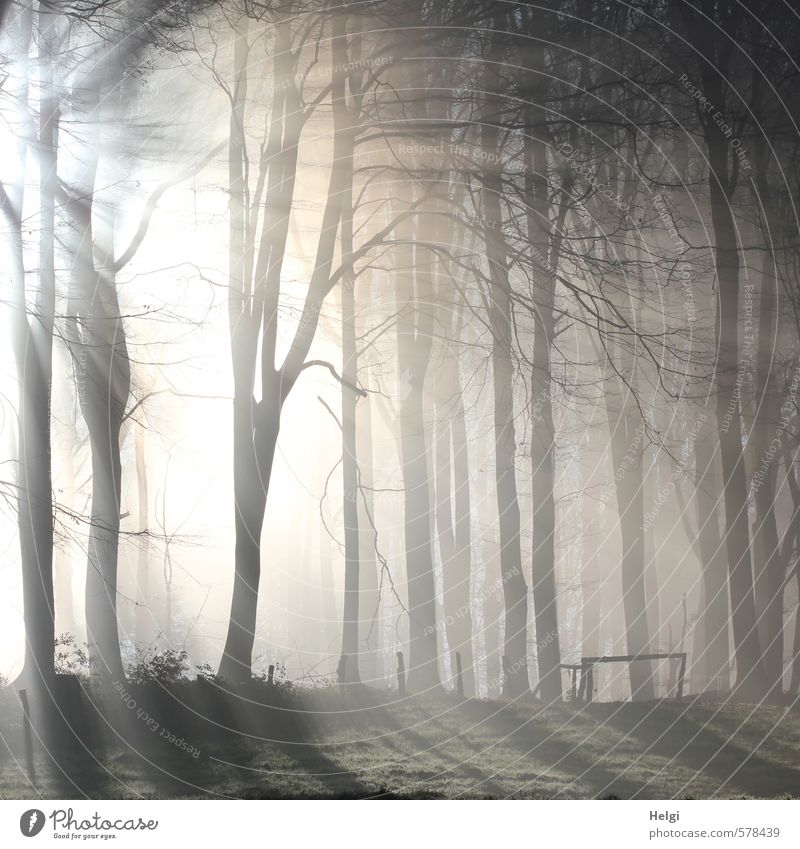 December morning... Environment Nature Landscape Plant Winter Fog Ice Frost Tree Forest Fence Illuminate Stand Esthetic Exceptional Cold Natural Brown Gray