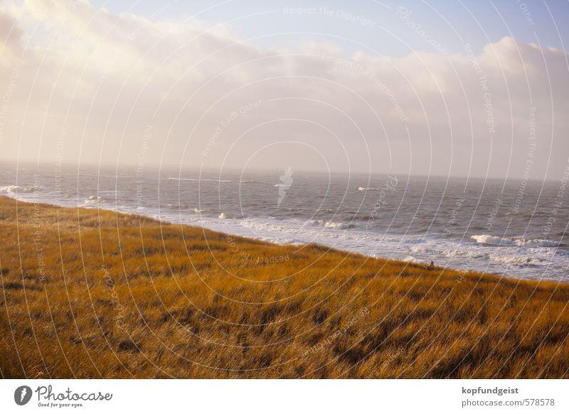 Sky Nature Water Plant Sun Ocean Landscape Animal Environment Warmth Grass Coast Sand Lake Moody Air