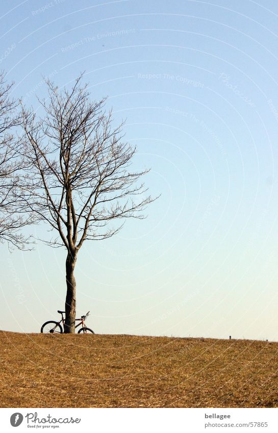 abandoned bicycle Bicycle Loneliness Meadow Exterior shot Tree Winter Calm Grass Yellow Horizon Hill Light Cold Gloomy Sky Blue Bright Branch no sheets