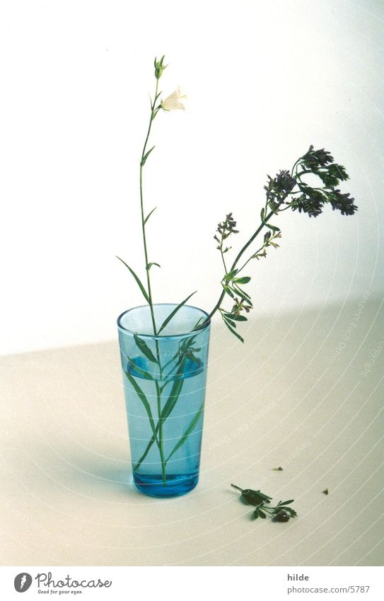 Flower Blue Glass Things Vase