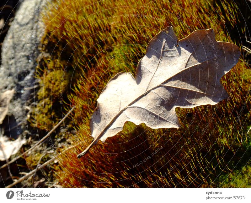 Nature Sun Plant Leaf Autumn Stone Wood grain Moss Carpet of moss