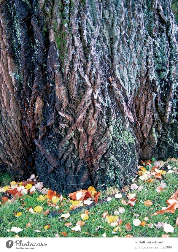Nature Tree Leaf Autumn Grass Tree trunk Tree bark