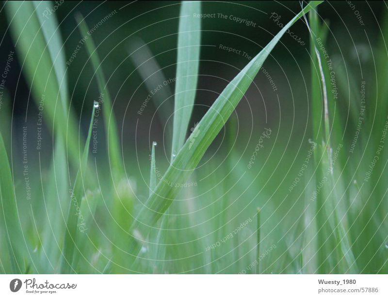 morning dew Foliage plant Grass Dew Green Beautiful Feed Calm Slow motion Meadow Grassland Nutrition Green space Pasture Meal Food Death Glade Contemplative