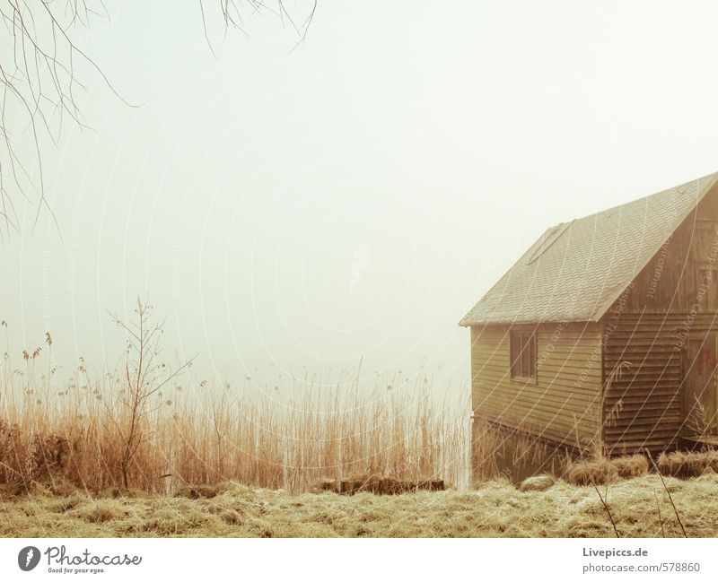 boat shed Nature Landscape Plant Earth Sky Autumn Winter Fog Grass Bushes Lakeside Fishing village Deserted Brown Yellow Gray Green Black Silver White Barn
