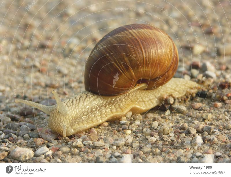 House (Residential Structure) Flat (apartment) Safety Snail Slowly Snail shell Summer evening