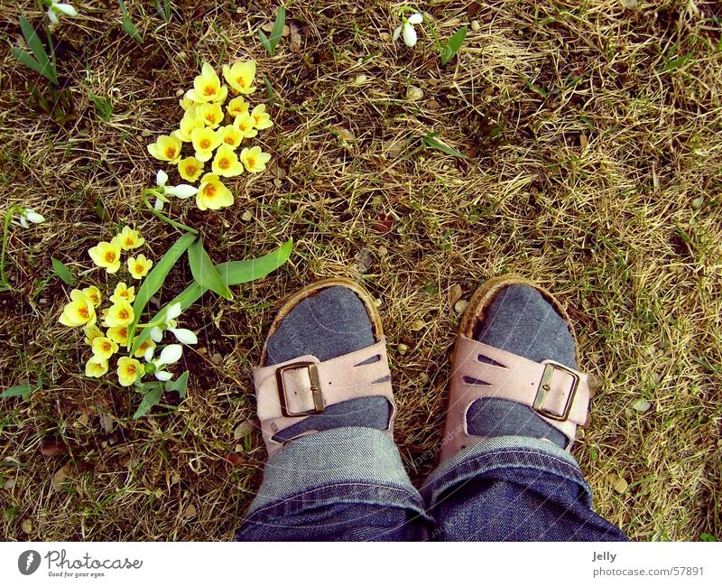 first steps into spring Slippers Spring Crocus Yellow Meadow Pebble Feet Lawn Stone