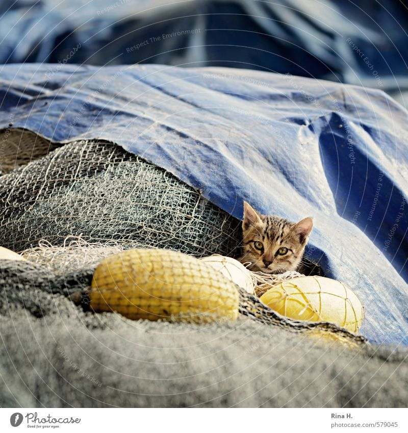 Fisherman's Friend III Cat 1 Animal Baby animal Observe Sit Cute Skeptical Buoy fishing nets Caution Square Hide Colour photo Exterior shot Deserted