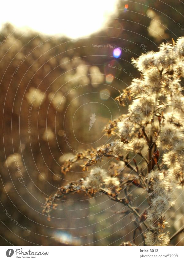 Sky Nature Plant Sun Summer Flower Leaf Environment Yellow Meadow Autumn Spring Blossom Jump Bright Horizon