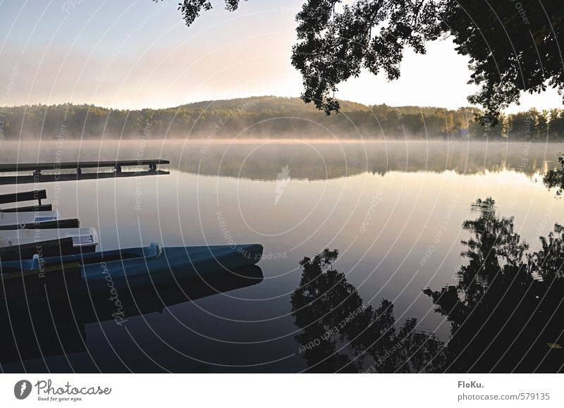 Sky Nature Vacation & Travel Blue Green Water Summer Tree Landscape Calm Animal Environment Coast Lake Natural Moody