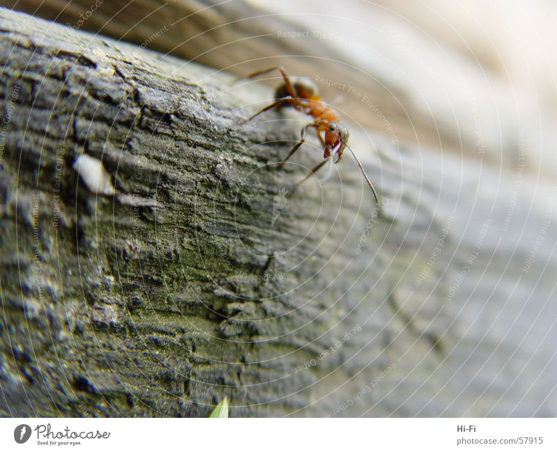 Ant at work Wood Tree trunk Waldameise Nature Close-up