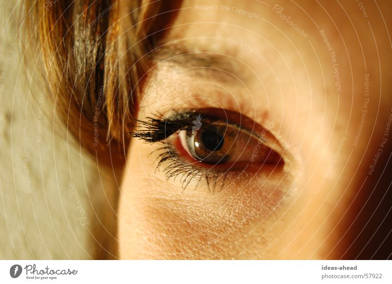 Eye-catcher° Woman Young woman Brown eyes Eyes Looking Face Clarity Detail steffi