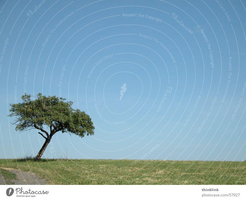 evasive manoeuvre Tree Landscape Lanes & trails Curve Sky
