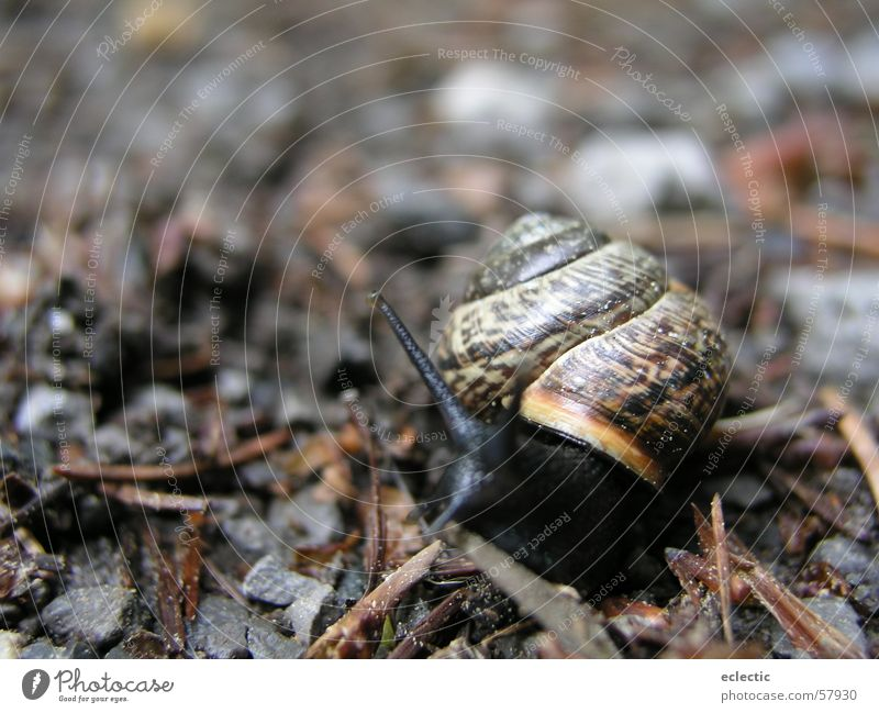 Nature Animal Floor covering Depth of field Snail Feeler Crawl Reptiles Slowly Woodground Snail shell
