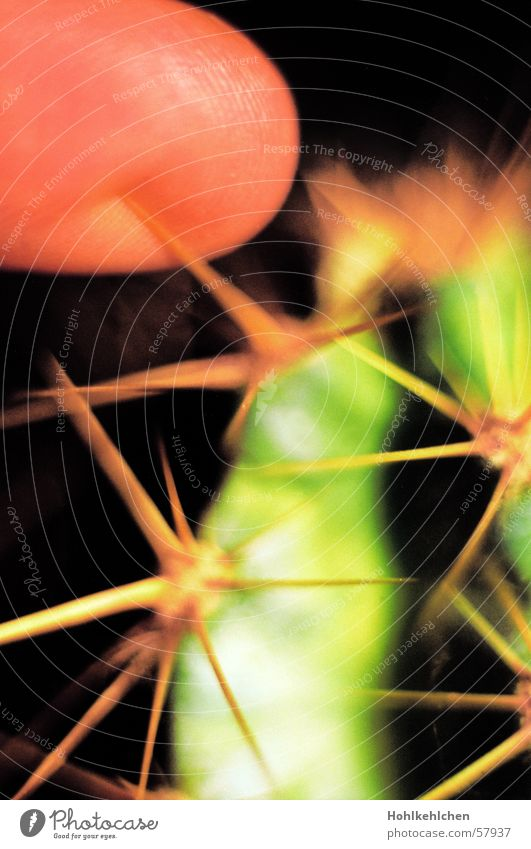 Green Plant Fingers Point Pain Cactus Pierce Hand