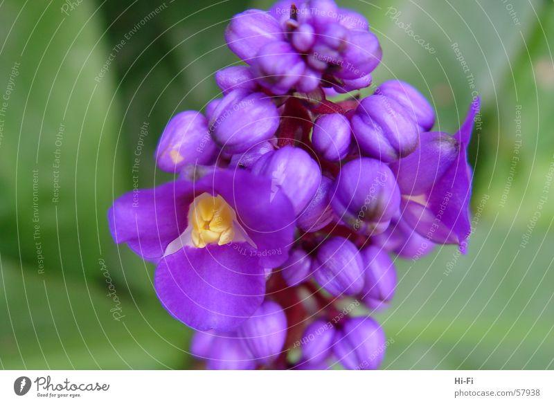 blossom Plant Flower Meadow Grass Leaf Blossom Violet Nature Close-up