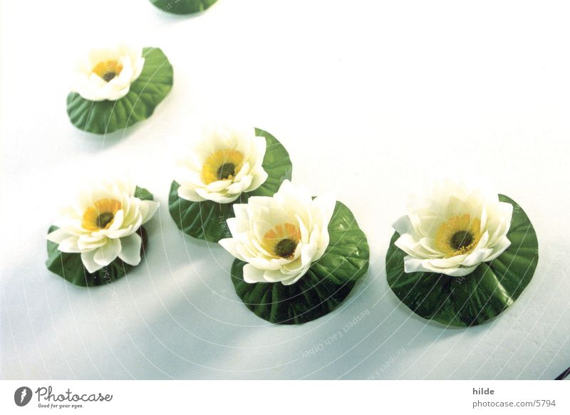 White Flower Placed Aquatic plant Water lily Artificial flowers Silk flower