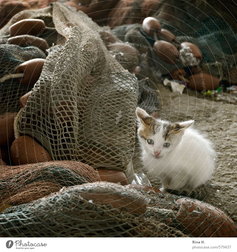 Fisherman's Friend IV Animal Cat 1 Baby animal Observe Sit Wait Cute Timidity Fear Fishing net Square Subdued colour Exterior shot Deserted