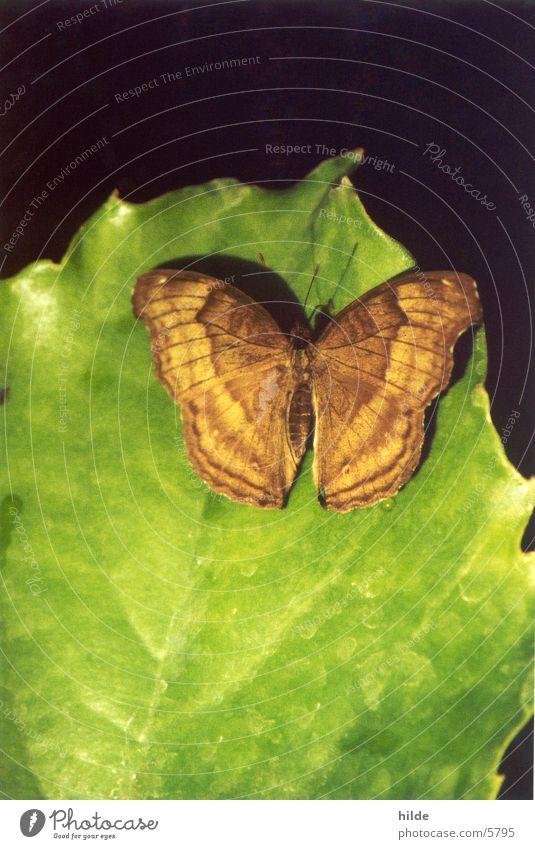 butterfly Butterfly Leaf Green Brown