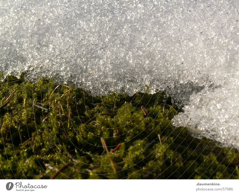 White Green Winter Cold Snow Meadow Spring Drops of water Wet Lawn