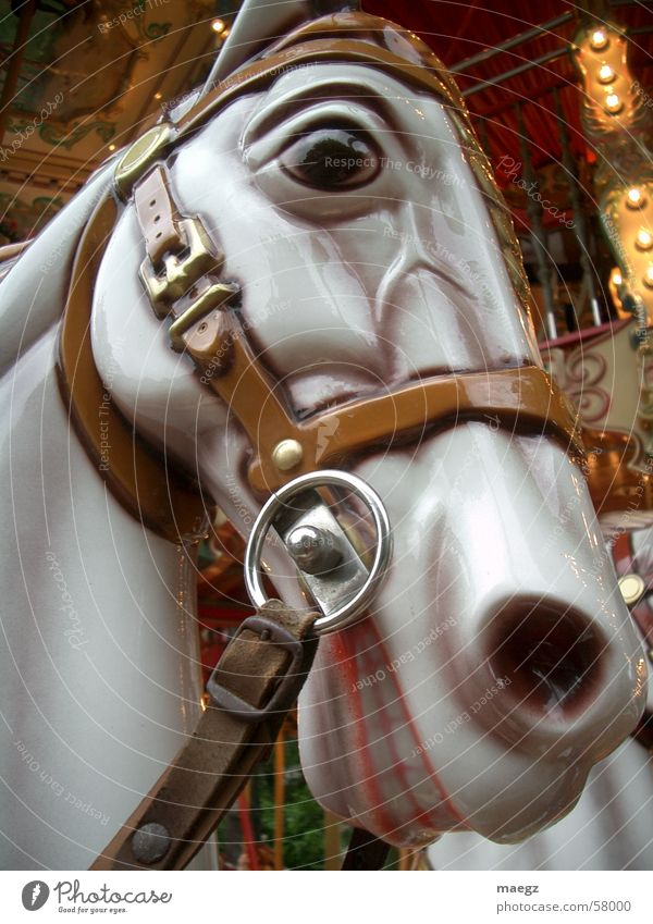 a horse with no name Horse Toys Glittering Carousel Crockery Halter Leisure and hobbies Exterior shot Joy Macro (Extreme close-up) Fairs & Carnivals