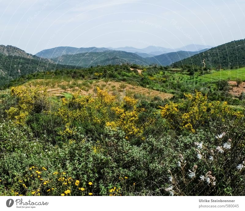 Sardinian beginning of spring Vacation & Travel Tourism Mountain Hiking Environment Nature Landscape Plant Spring Tree Flower Bushes Foliage plant