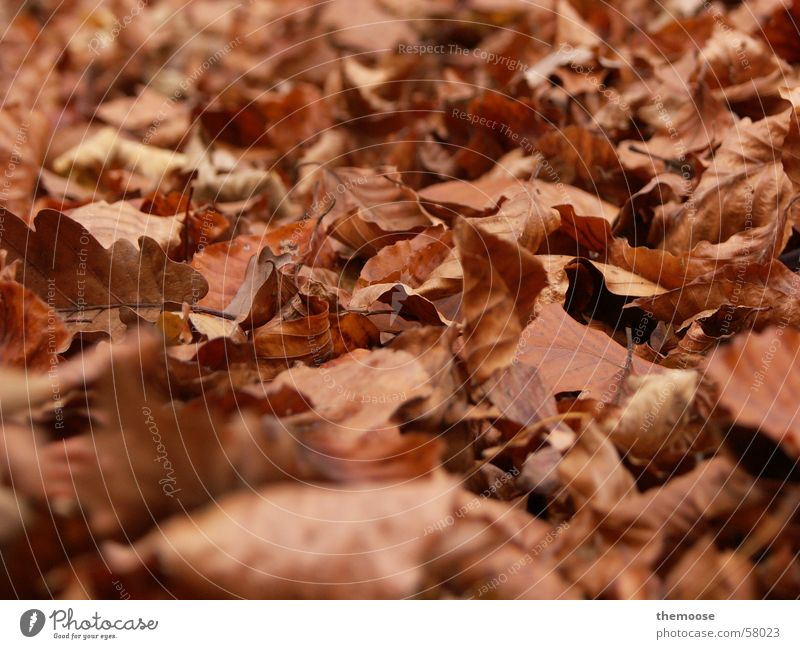 Old Leaf Calm Death Autumn Brown Floor covering Grief Limp Like