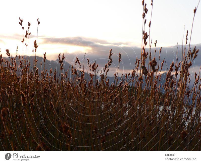 evening mood Sunset Field Straw Grass Clouds Mountain